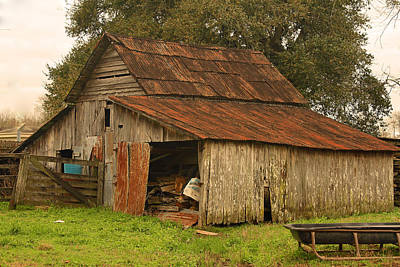 Photograph - Cajun Cattle Barn by Ronald Olivier