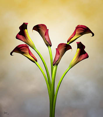 Lilies Wall Art - Photograph - Cala Lily 5 by Mark Ashkenazi