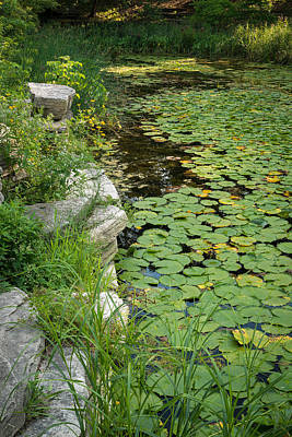 Lilies Royalty-Free and Rights-Managed Images - Caldwell Lily Pond Chicago IL Number 2 by Steve Gadomski