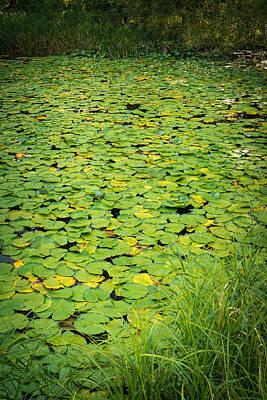 Caldwell Photograph - Caldwell Lily Pond Chicago Il by Steve Gadomski