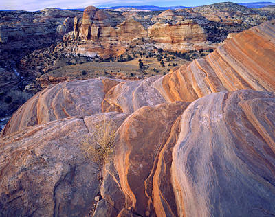 Photograph - Calf Creek Color by Ray Mathis