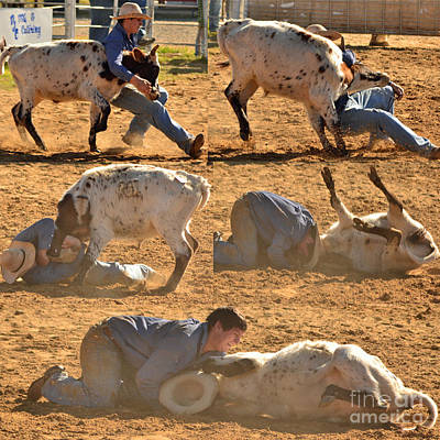 Cowgirl Photograph - Calf Mugging Progression by Kris Wolf