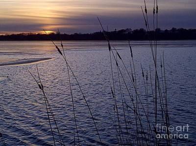 Photograph - Calhoun Lavender by A K Dayton