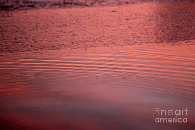 Photograph - Calhoun Pink by A K Dayton