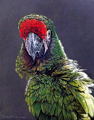 Painting - Cali by Linda Becker