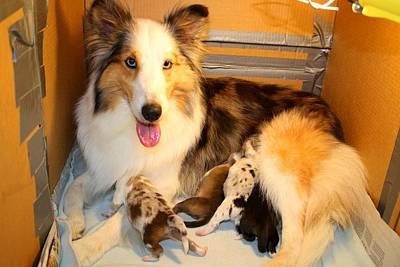 Photograph - Calico And All Four Pups by Kathryn Meyer