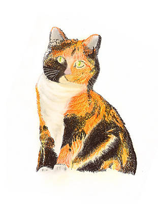 Calico Arabella Print by Jack Pumphrey