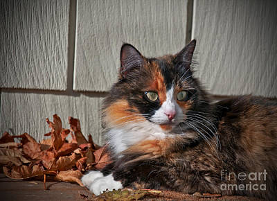 Photograph - Calico Cat Laying Outdoors Art Prints by Valerie Garner
