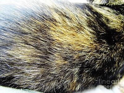 Photograph - Calico - Cat - Coat by D Hackett