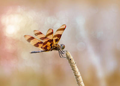 Saddlebag Photograph - Calico Pennant by Bill Tiepelman