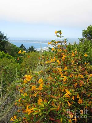 Photograph - California Blossoms 01 by Ausra Huntington nee Paulauskaite