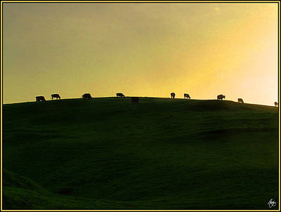 Photograph - California Coast Cows At Sunset by Wayne King