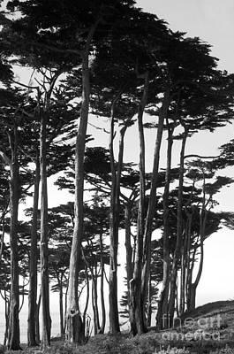 Photograph - California Coastal Trees by Haleh Mahbod
