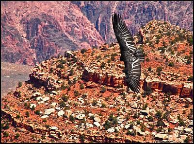 Photograph - California Condor Over The Grand Canyon by Matthew Heller