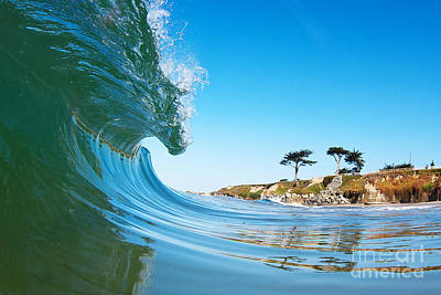 Photograph - California Curl by Paul Topp