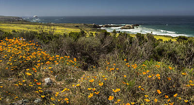 Photograph - California Gold By Denise Dube by Denise Dube