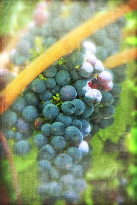 Photograph - California Grapes With Textures Img 2202 by Greg Kluempers