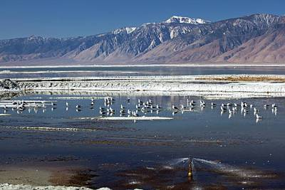 Dry Lake Photograph - California Gulls On Owens Lake by Jim West
