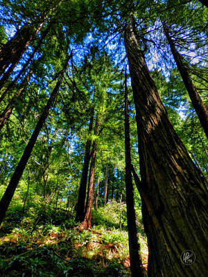 Photograph - California - Muir Woods 004 by Lance Vaughn
