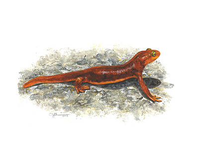 Painting - California Newt by Cindy Hitchcock