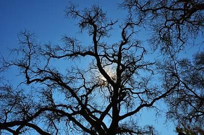 California Oak Sun Tree Art Print