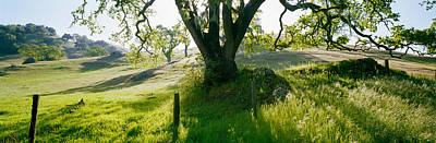 Central Coast Photograph - California Oaks Trees, Central Coast by Panoramic Images