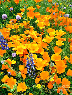 Art Print featuring the photograph California Poppies And Betham Lupines Southern California by Dave Welling