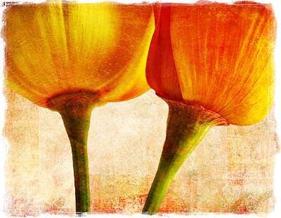 California Poppies Art Print by Elena Nosyreva