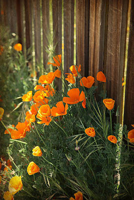 Photograph - California Poppies by Enzie Shahmiri