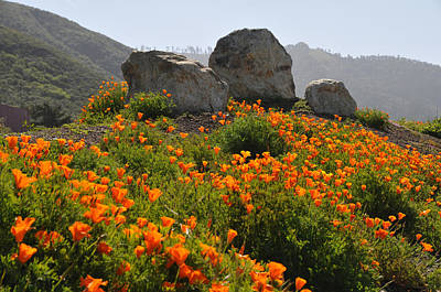 Art Print featuring the photograph California Poppies by Lynn Bauer
