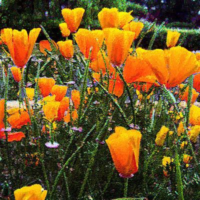 Photograph - California Poppies by Michele Avanti