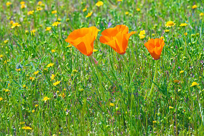 Photograph - California Poppies by Ram Vasudev