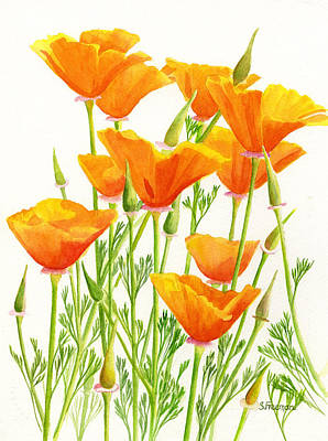 Watercolour Art Painting - California Poppies by Sharon Freeman