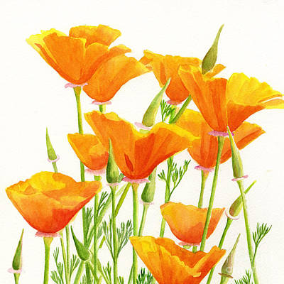 Orange Poppy Painting - California Poppies Square Design by Sharon Freeman