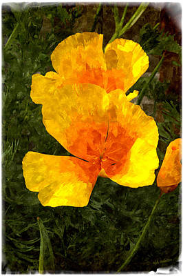 Abstract California Poppies Photograph - California Poppy Fantasy by Mick Anderson
