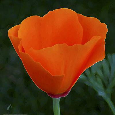 Photograph - California Poppy Spectacular by Ben and Raisa Gertsberg