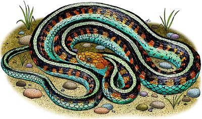 Garter Snake Photograph - California Red-sided Garter Snake by Roger Hall