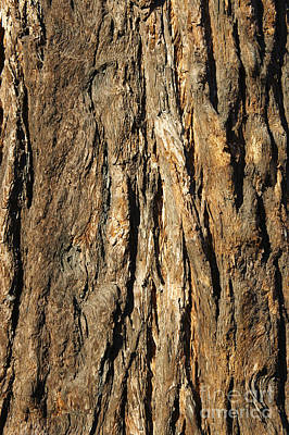 Photograph - California Redwood Bark by John  Mitchell