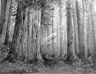California Redwood Art Print