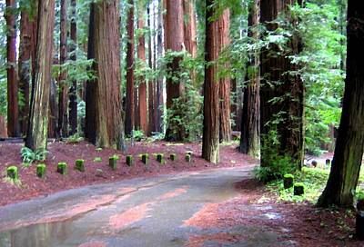 Digital Art - California Redwoods 3 by Will Borden