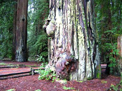 Digital Art - California Redwoods 4 by Will Borden