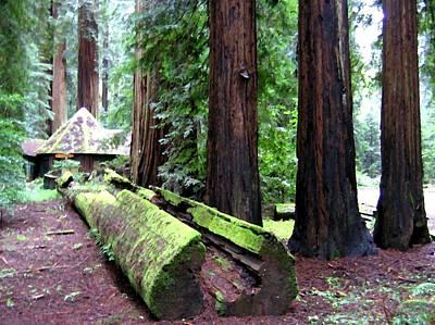 Digital Art - California Redwoods 5 by Will Borden