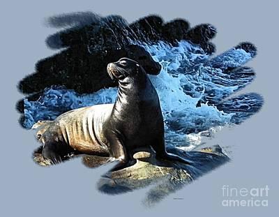 Mistletoe - California Sea Lion by Scott Cameron