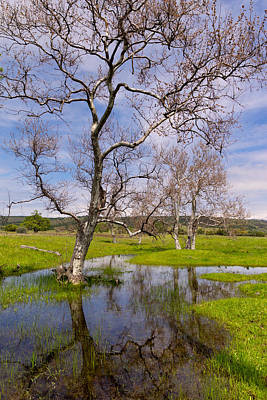 Kathleen Photograph - California Sycamore Reflected by Kathleen Bishop