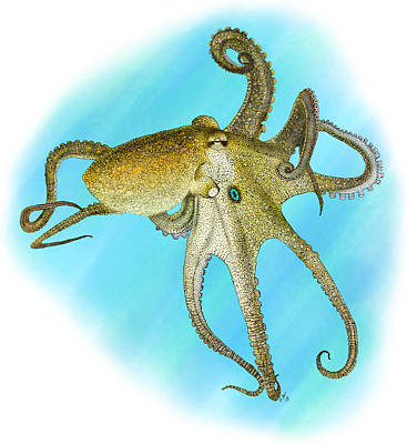 Photograph - California Two-spot Octopus by Roger Hall