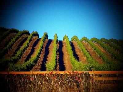 California Vineyard Art Print by Joyce Kimble Smith