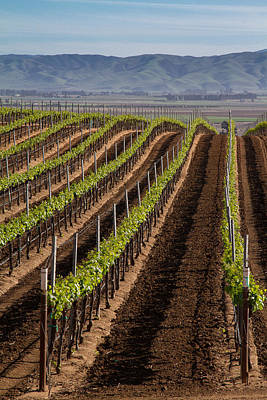 Photograph - California Vineyard by Roger Mullenhour