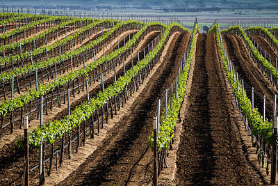 Photograph - California Vineyards by Roger Mullenhour