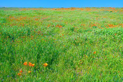 Photograph - California Wildflowers by Ram Vasudev