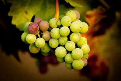 Central Coast Winery Photograph - California Winery Grapes by Richard Cheski